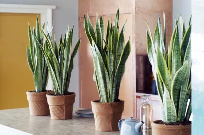 10 szobanövény, ami tökéletes mikroklímát teremt a lakásban