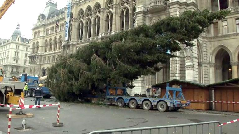 130 éves, 27 méter magas Bécs karácsonyfája