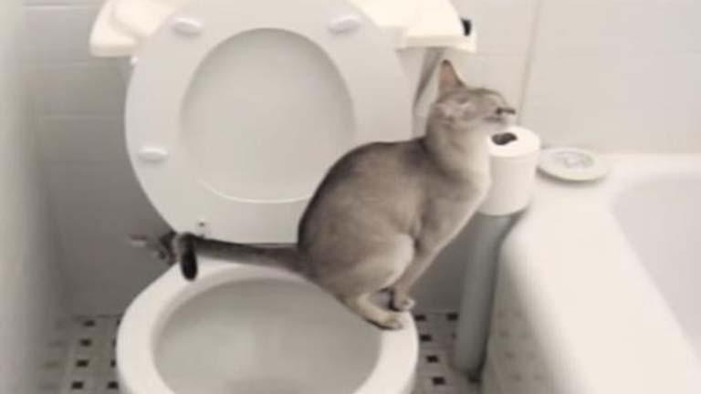 Az emberek vécézni tanítják a macskákat, de jó dolog ez?
