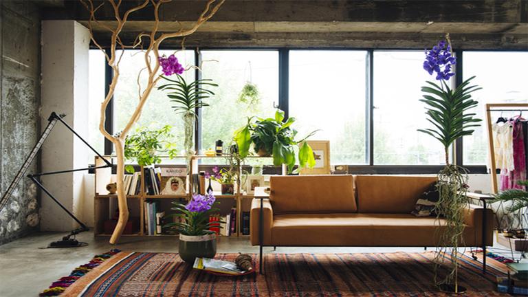 Függesztett és lebegő szobanövény a divat