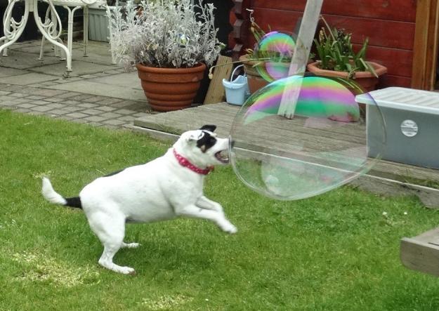 Ezek a kutyák imádják a buborékokat, mi meg őket!