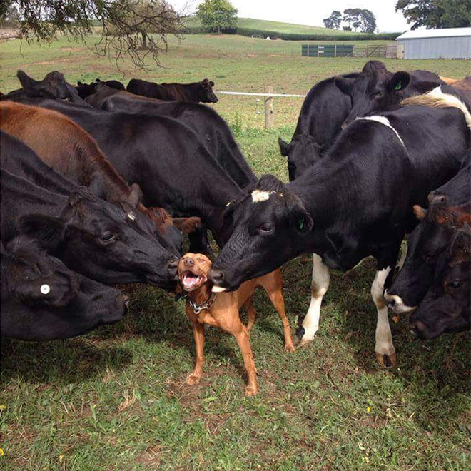 Soha nem lesz annyira jó napod, mint ezeknek az állatoknak