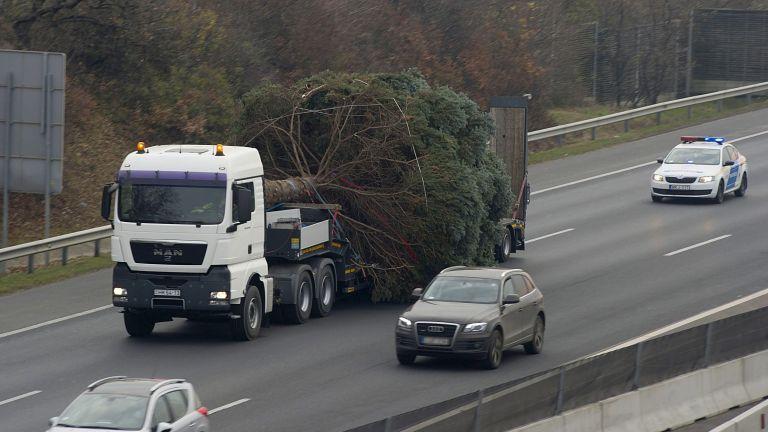Honvédségi trélerrel, rendőri kísérettel utazik a fa az M7-esen