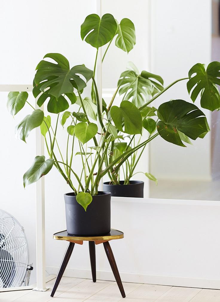 9 növény, ami minden enteriőrben szuperül mutat