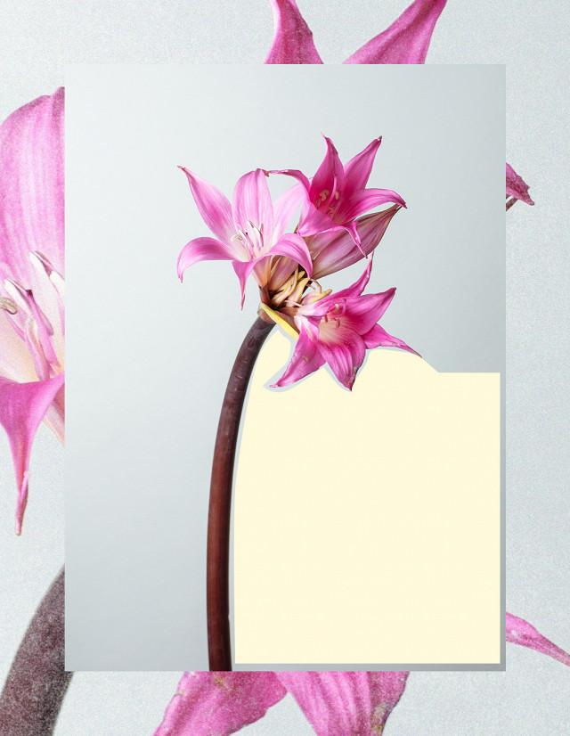 Ezek a tél legtrendibb virágai
