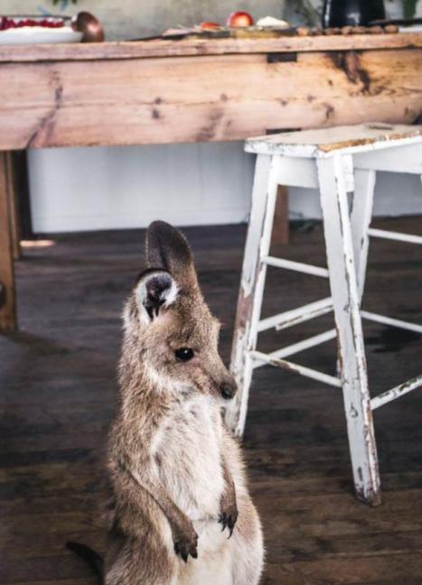 Ilyen a karácsony egy kengurubébivel- tündéri fotók