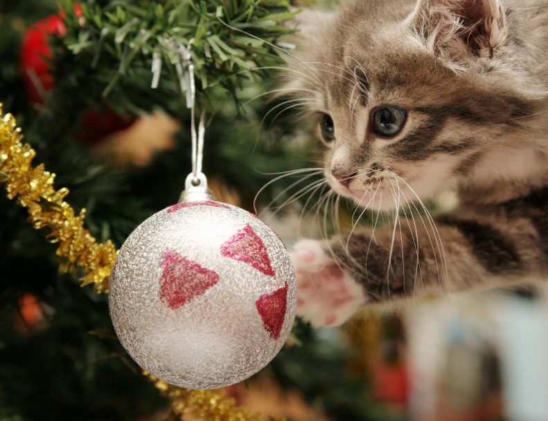 10 macska, aki már nagyon izgatott a karácsony miatt