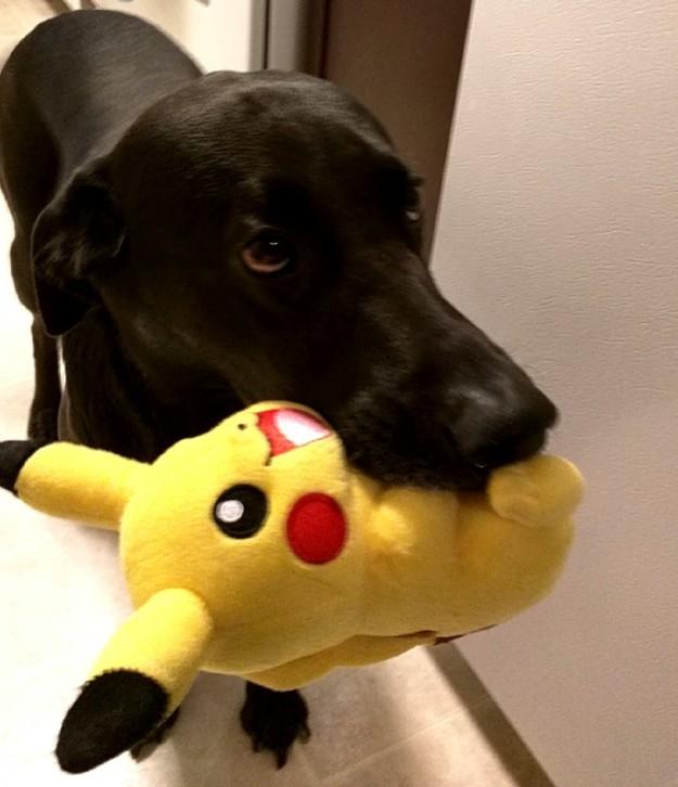 Kutyák és macskák, akik nem hajlandóak elereszteni kedvenc játékaikat
