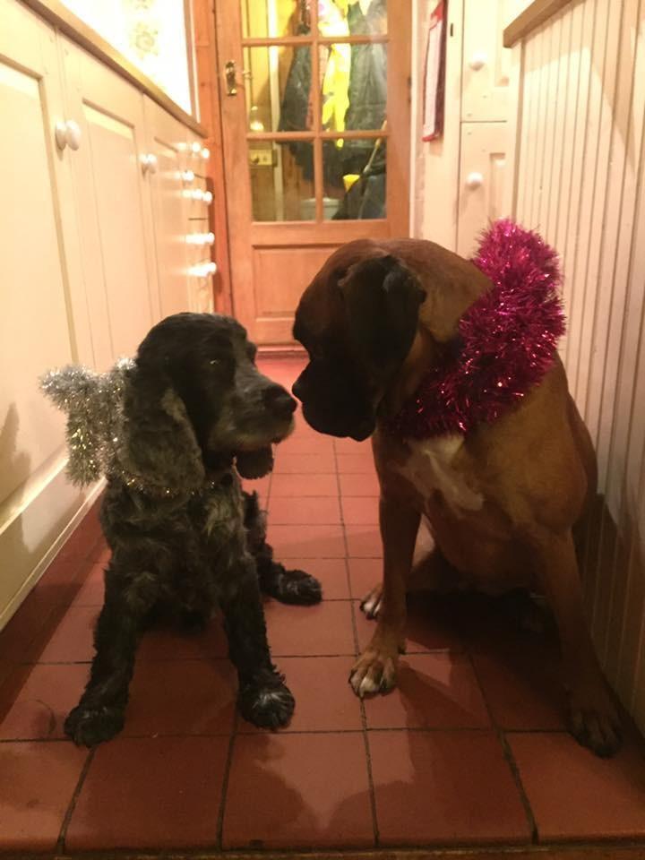 Előrehozta a család a karácsonyt, hogy beteg kutyájukkal ünnepelhessenek