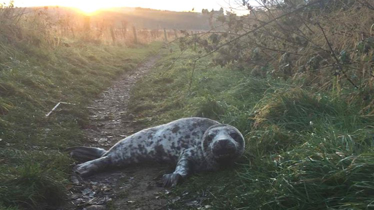 Kimerült bébifókát találtak a tengertől 1 mérföldre kószálva