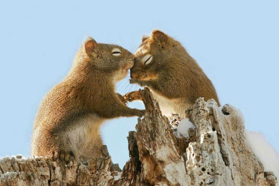 Ezek az állatok bebizonyítják, hogy a szeretet igenis mindenhol ott van