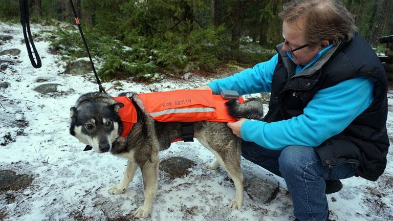 Jussi Aro feltaláló és kutyája Minkak kipróbálják a chilis mellény prototítpusát - fotó: Pertti Huotari / Yle