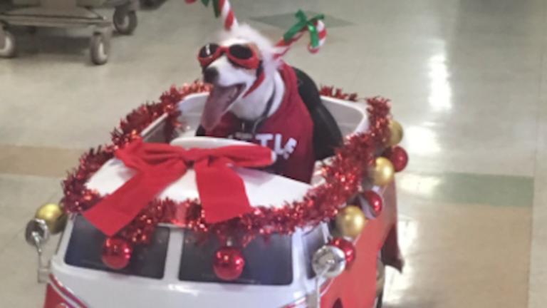 Ez a jó fej kutya árasztotta a karácsonyi hangulatot egy kórházban