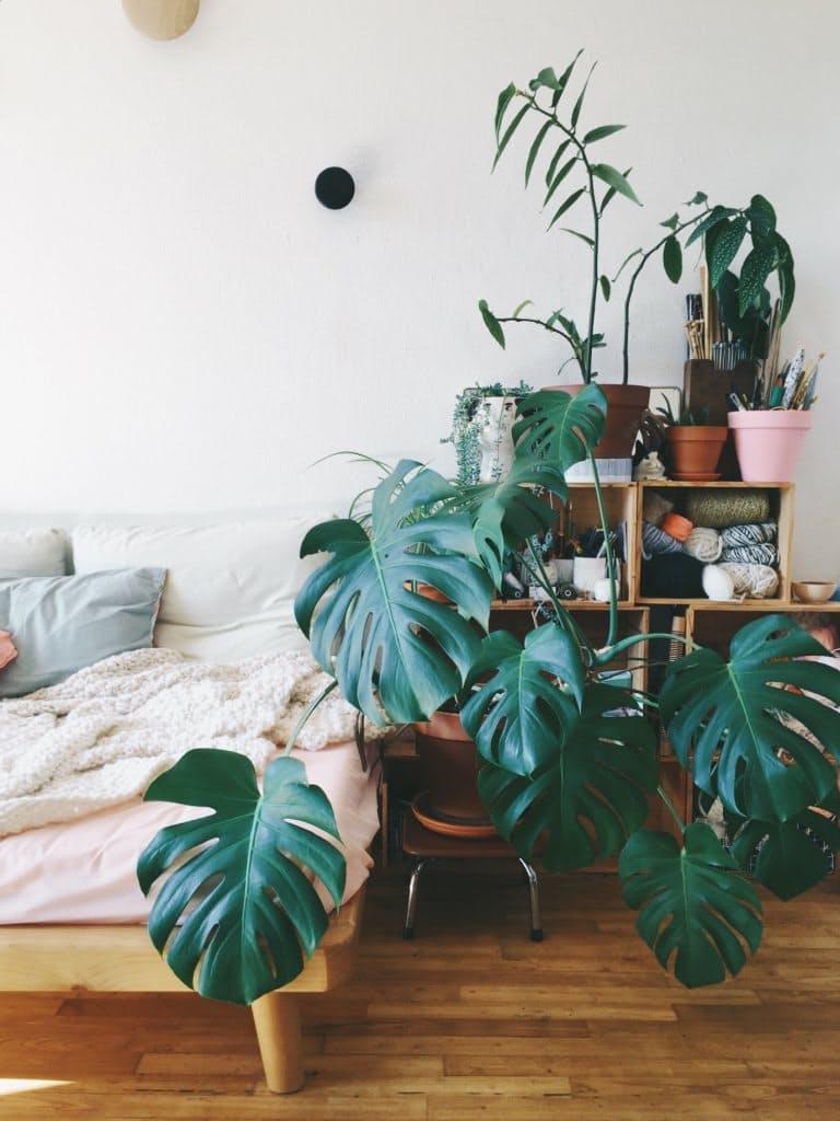 Felejtsd el a fikuszt: bemutatjuk 2017 legmenőbb szobanövényét a könnyezőpálmát!