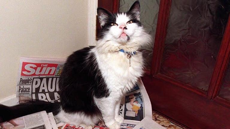 Humphrey tisztázta magát a vörösbegy-fiaskó vádjai alól (Fotó: Tumblr)