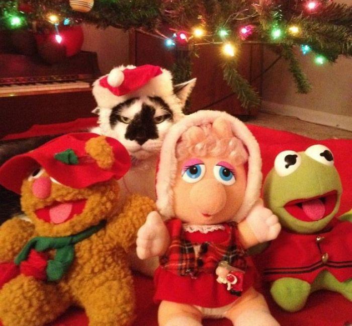 12 állat, aki mindennél jobban utálja a karácsonyt -vicces fotók