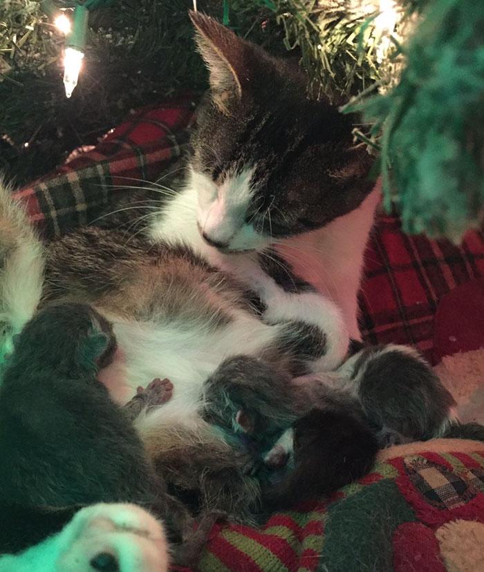 Karácsonyfa alatt ellett meg a macska - fotók