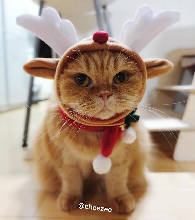 Elárasztották az Instagramot a karácsonyi macskák