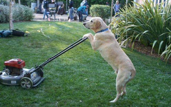 10 kutya, aki egészen biztosan embernek képzeli magát - vicces fotók
