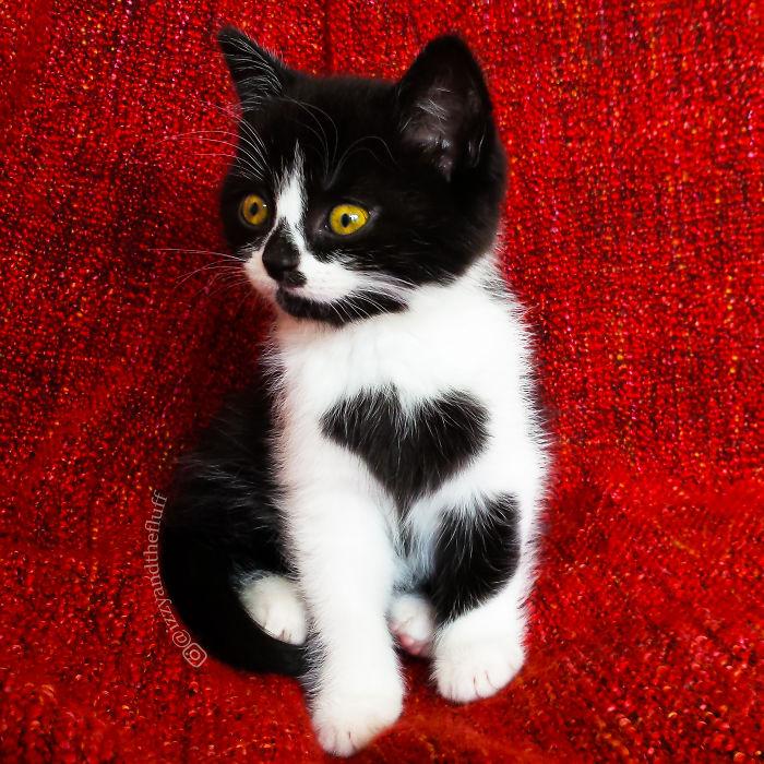 Szívecskemintás bundája van a világ legcukibb cicájának