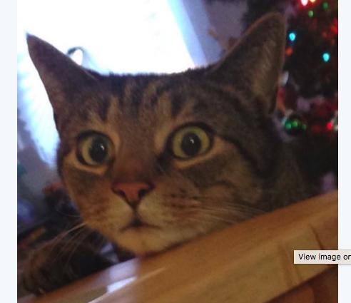 Vicces fotó: így néz a macska, akit lopáson kapnak