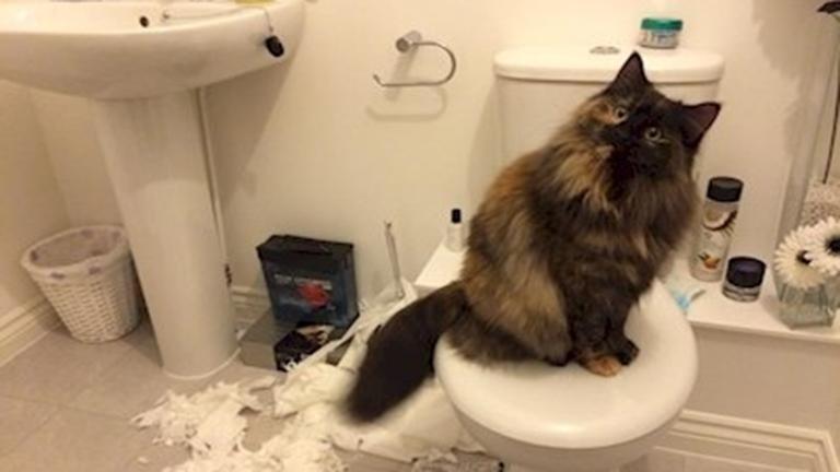 10 fotó, ami bebizonyítja, hogy a macskákat teljesen hidegen hagyja, mi van veled