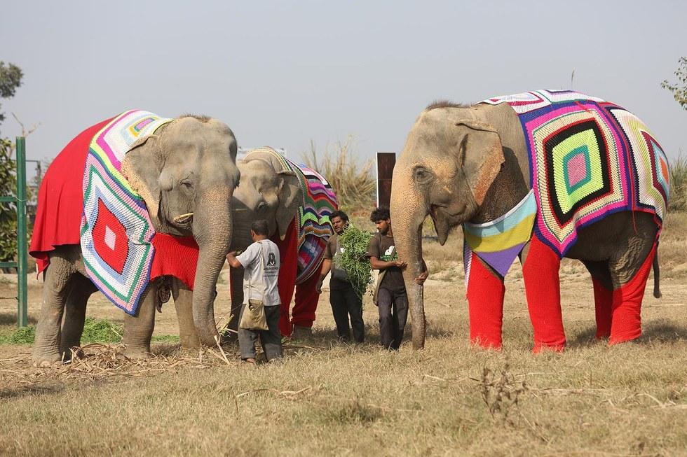Megható: hatalmas pulcsikat kötnek az elefántoknak egy indiai falu lakói