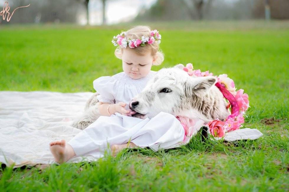 Testvéreként szereti az elárvult borjút a kislány - cuki fotók
