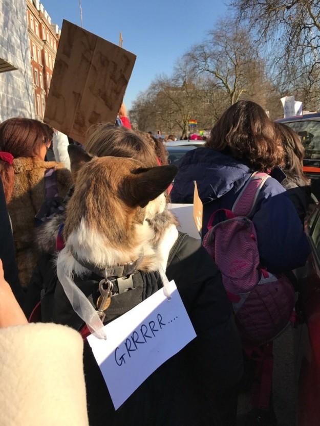 10 kutya, aki szintén nem örül, hogy Trump az elnök