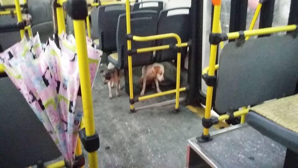 Megható dolgot tett a kóbor kutyákért a buszsofőr