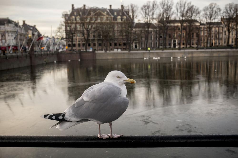 Hollandia égen-földön