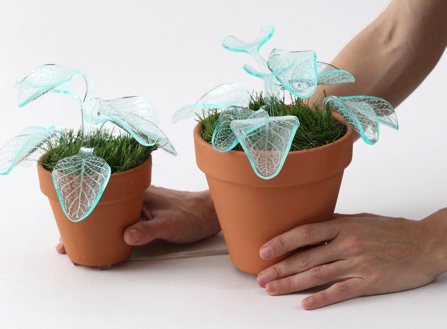 Ezeket a növényeket locsolnod sem kell, és még lámpának is megteszik