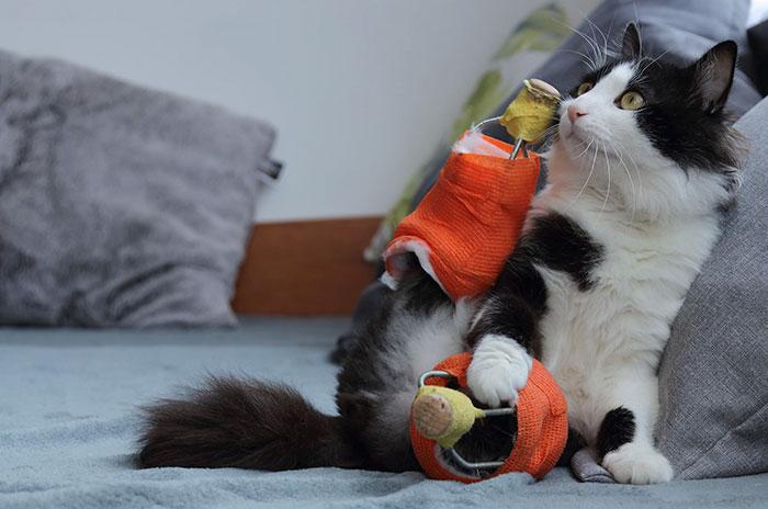 Újra járhat az amputált lábú cica