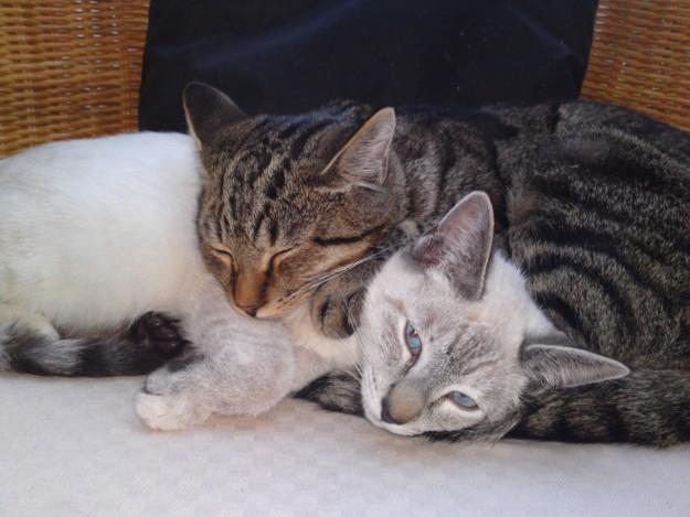 10 cuki macskabarátság, ami megolvasztja a jeges szíved - fotók