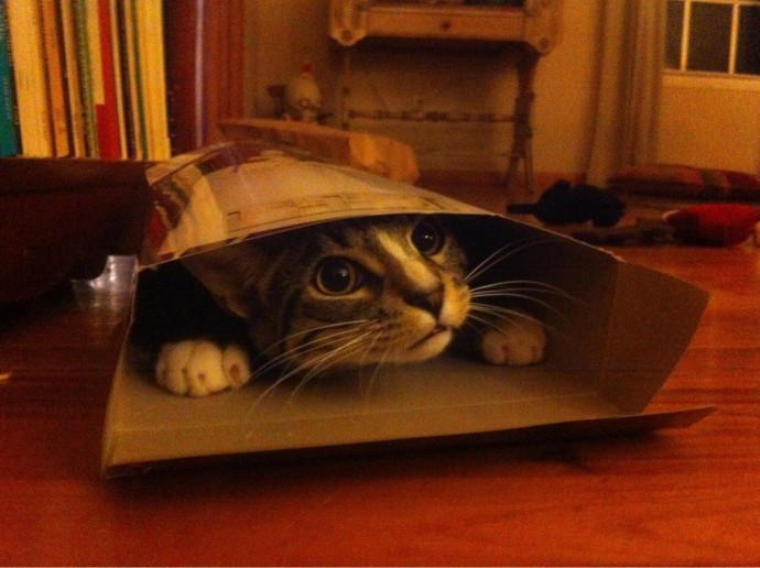 10 macska, aki nem gondolta át, mit csinál