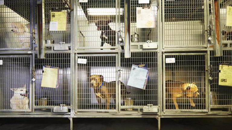 San Franciscóban már csak mentett állatokat vehetnek a kereskedésekben