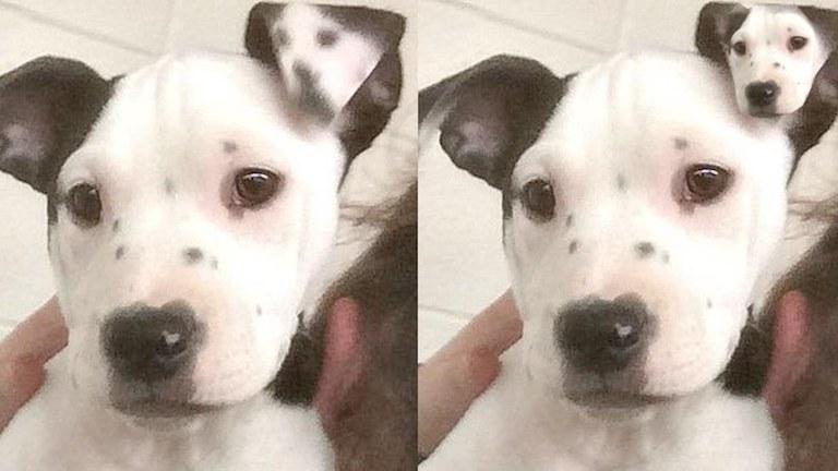 Egy szelfivel a fülén született ez a kutya