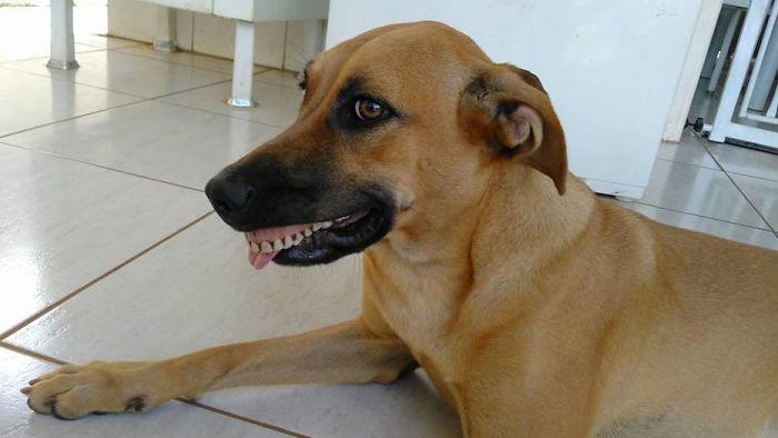 Megszakadt a röhögéstől a gazdi, mikor meglátta kutyája új mosolyát