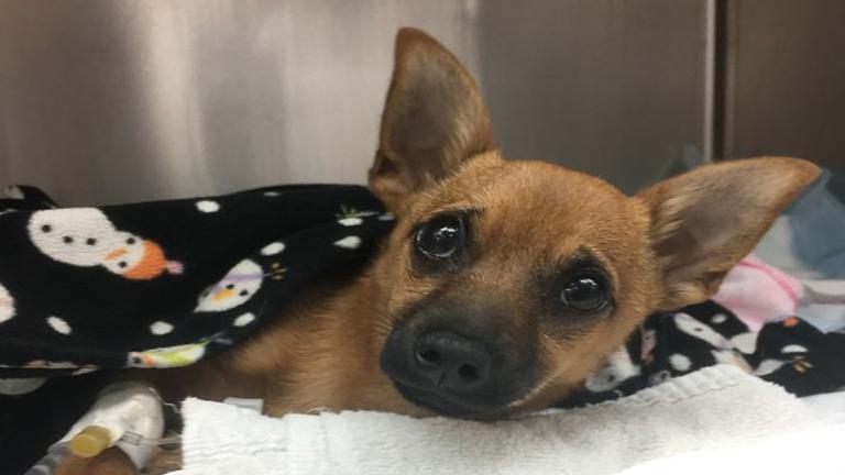 Új esélyt kapott a kutya, aki túladagolta gazdája heroinját