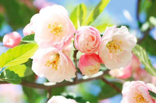 A 7 legszebb tavaszi virág | nlc
