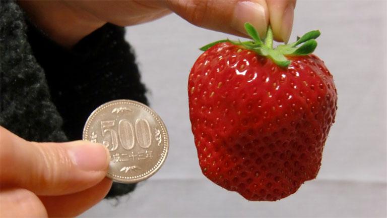 A Bijin-hime eper átlagos méretét jól mutatja az összehasonlítás (Fotó: Tumblr)