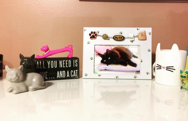 8 dolog, amit csak akkor érthetsz, ha a macskád a legjobb barátod