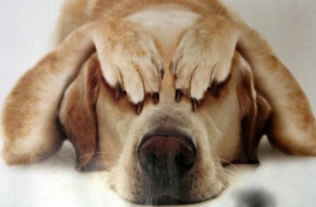 Nem csak az emberek stresszelnek, hanem az állatok is