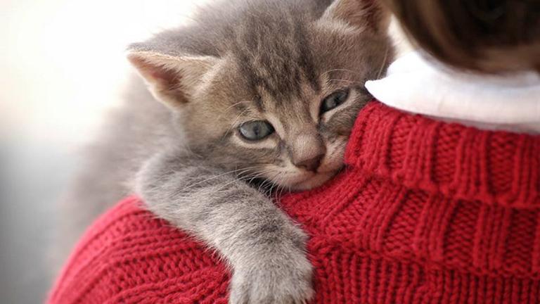 Egy friss tanulmány szerint a macskák igenis szeretnek minket