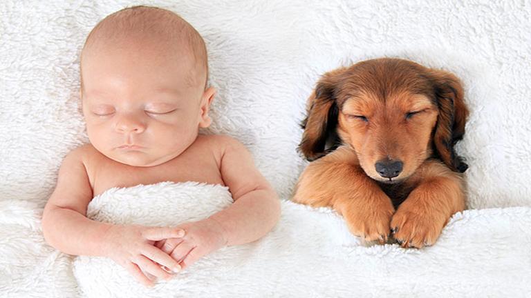 10 fotó, ami bebizonyítja, hogy a kutyák és a gyerekek a legjobb hálótársak
