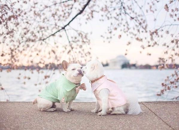 Ezek a kutyák eljegyezték egymást, és a világ kicsit jobb hely lett tőle
