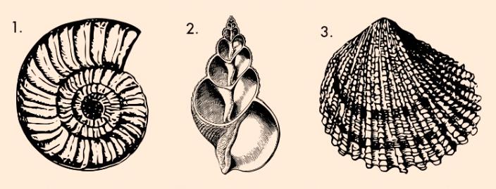 Válassz egy kagylót és fedezd fel a személyiséged rejtett zugait!