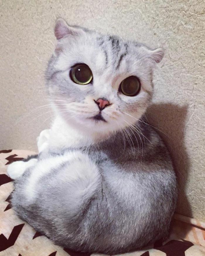 Ennek az tündéri cicának van a legtöbb követője az Instagramon