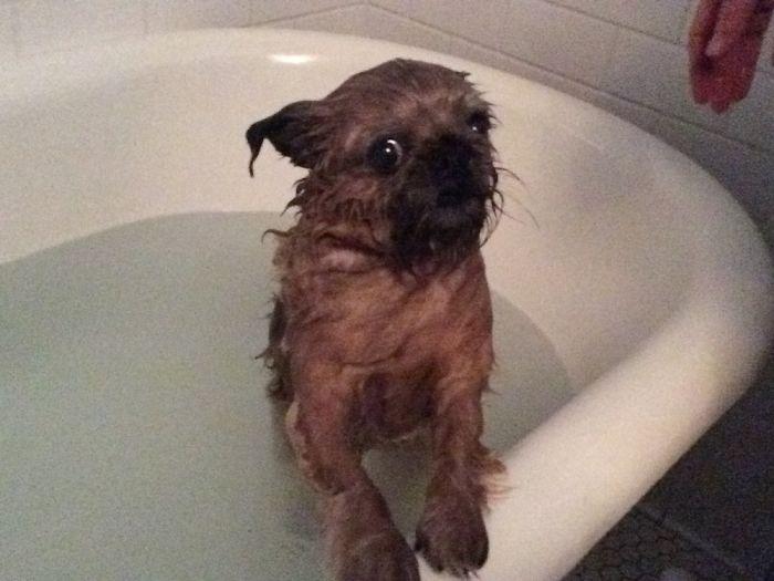 10 állat, aki nem annyira szeret fürdőt venni