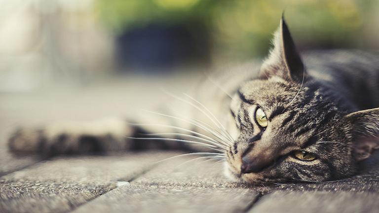 Így védelmezi a macskád az otthonod a negatív energiáktól és szellemektől
